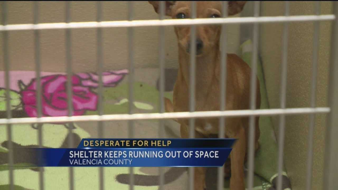 More people than usual are abandoning their dogs in Valencia County.