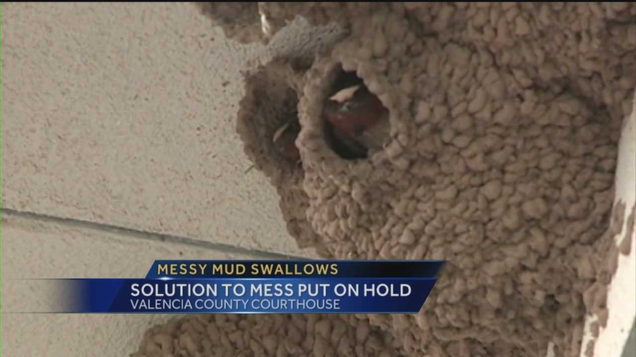 Dozens of Mud Swallows are once again causing a mess at the Valencia County Courthouse.