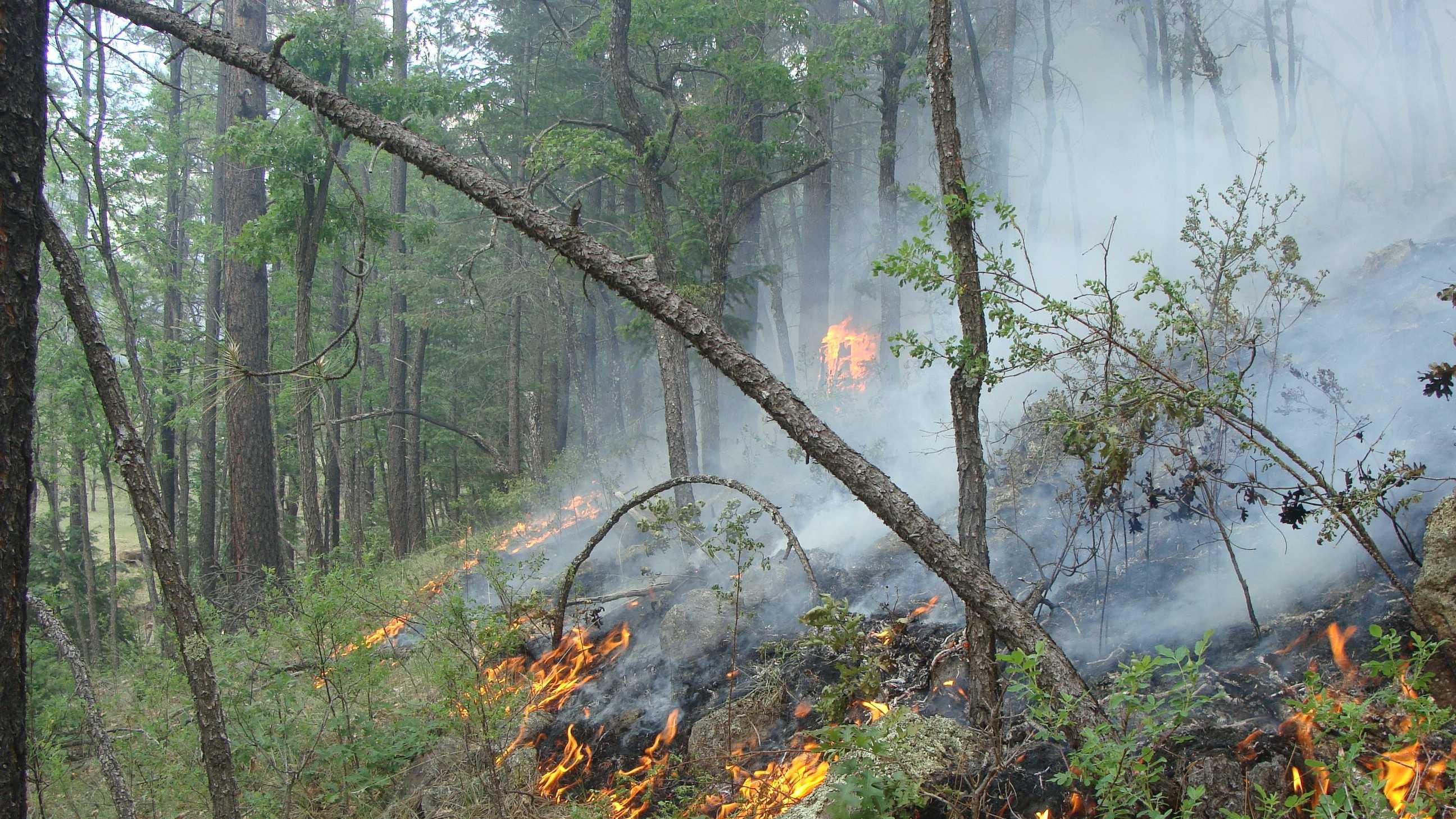 Pinon Wildfire