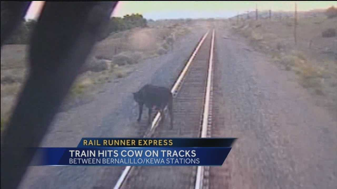 The New Mexico Rail Runner was headed north on its first Tuesday morning route when a cow tried, unsuccessfully, to cross the tracks.