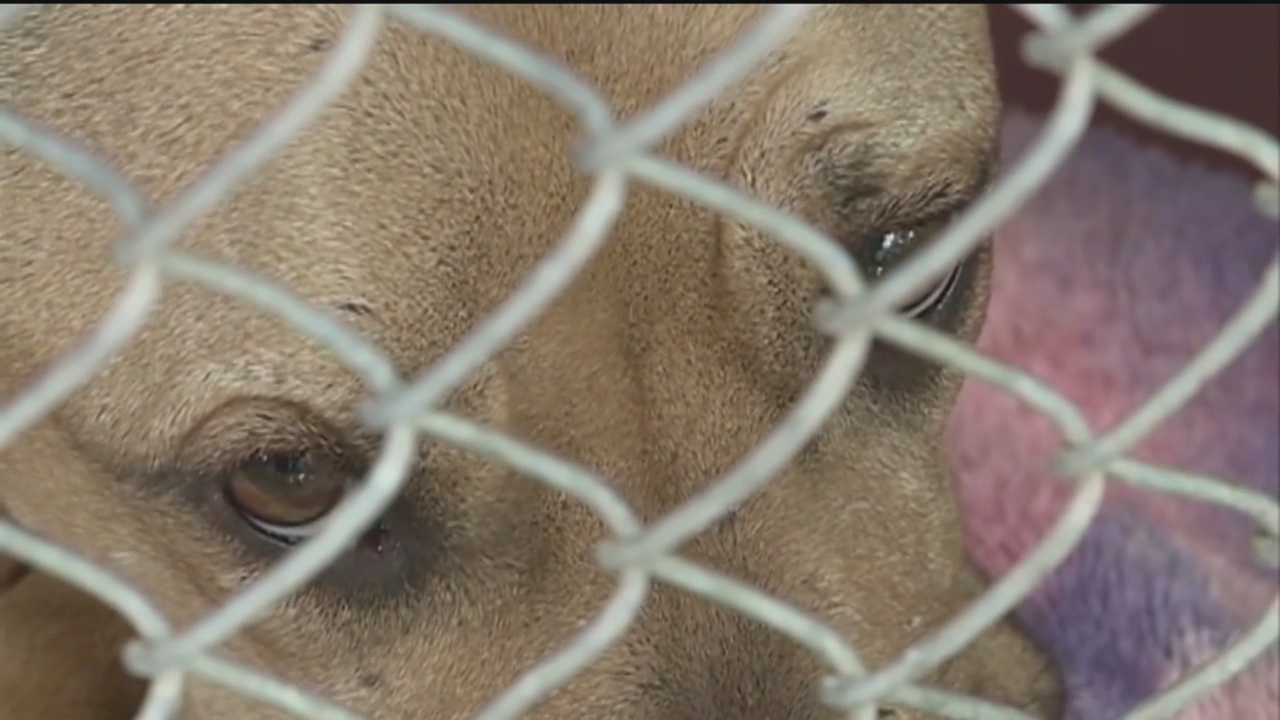 For months, we've told you about claims from some Animal Welfare workers who say city shelters were adopting out aggressive and dangerous animals.