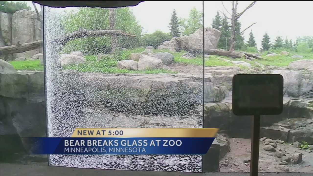 A grizzly bear exhibit at the Minnesota Zoo is temporarily closed after one of the bears picked up a basketball-sized rock and shattered a barrier.
