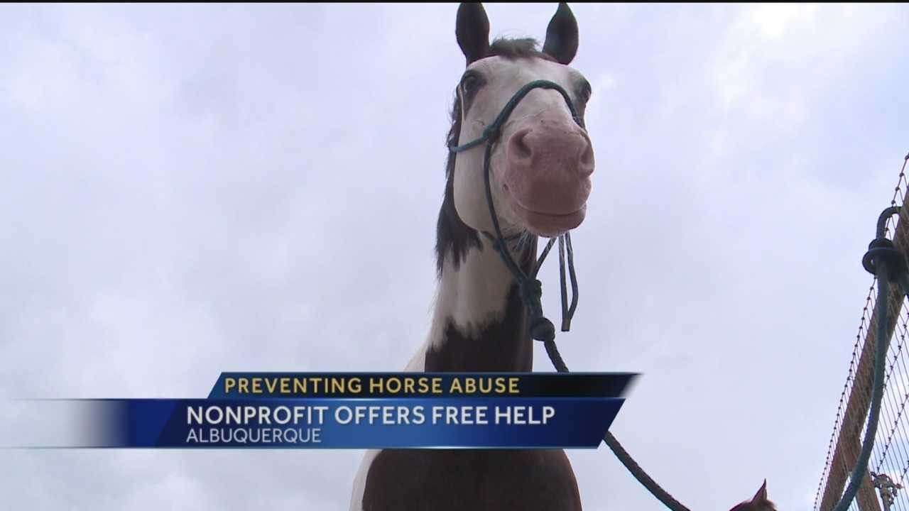 Horse neglect and abuse is a huge problem in New Mexico.