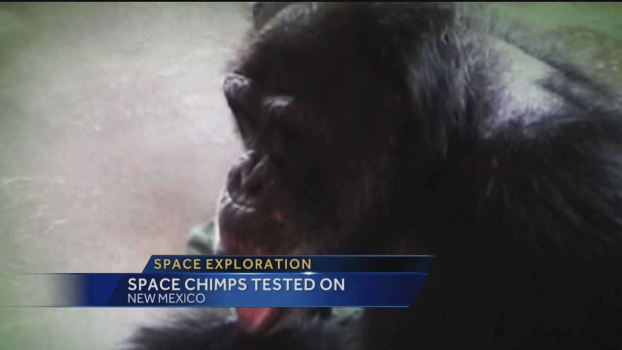 Last week we told you about New Mexico's crucial role in getting the space program off the ground, but you may not know about a dark past involving dozens of chimps.