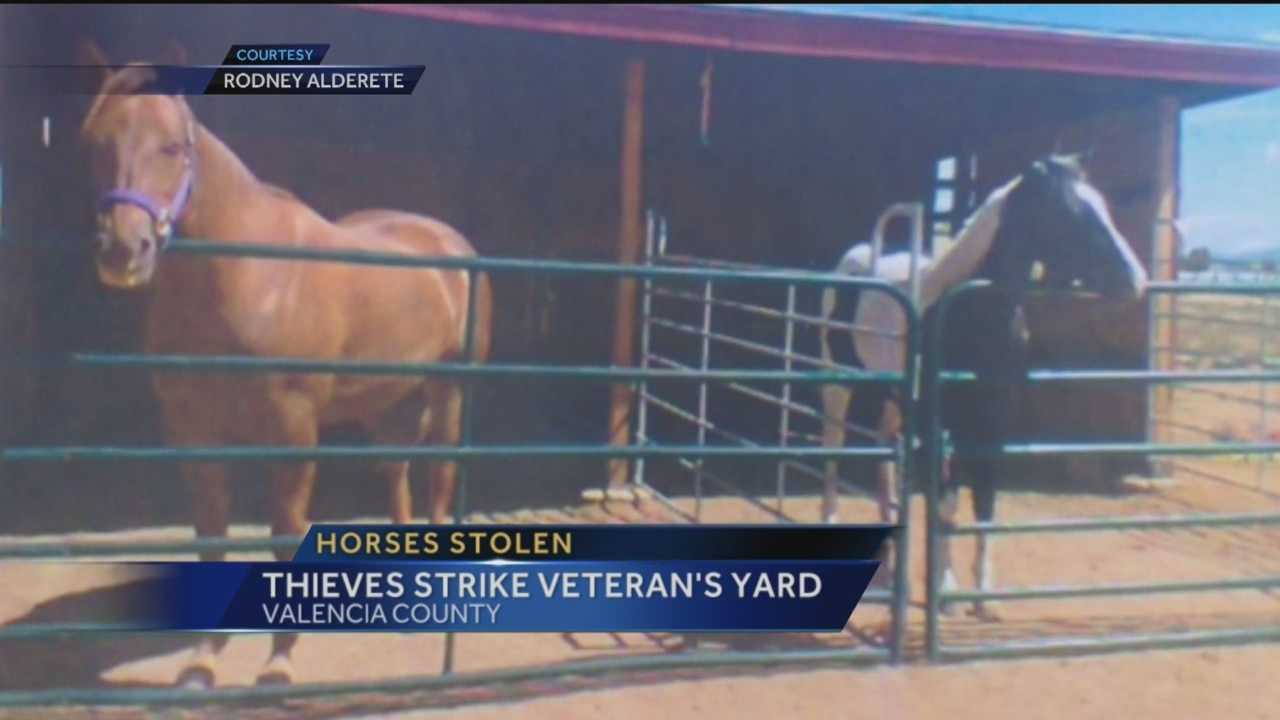 A decorated war veteran is heartbroken tonight after two prized horses were stolen.