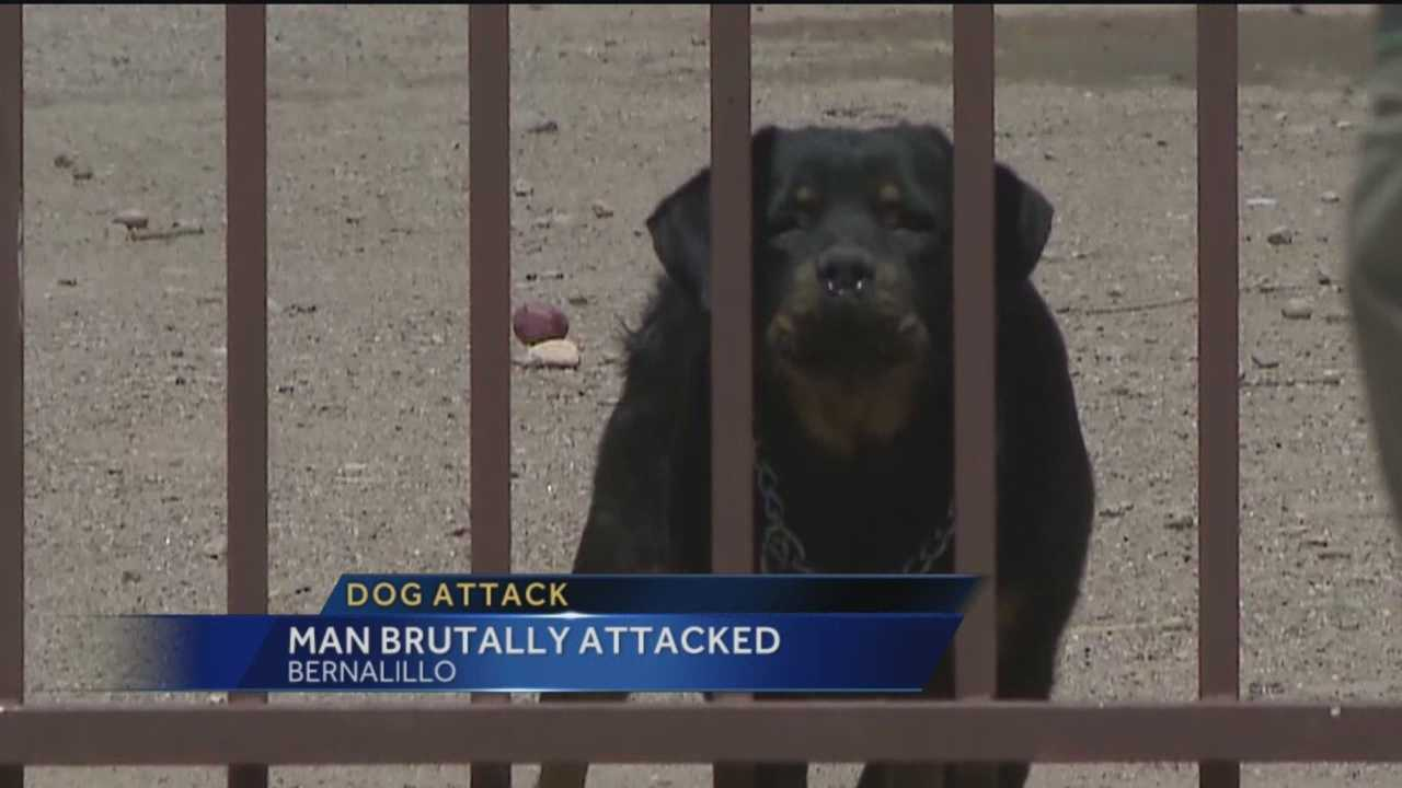 A Bernalillo man is asking authorities to get rid of his neighbor's three rottweilers after he was viciously attacked by them.