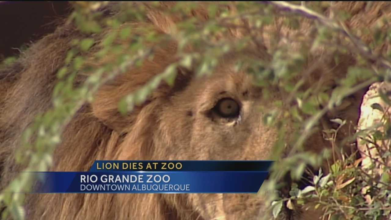 Tuesday was a solemn day at the Rio Grande Zoo after the park lost one of its own.