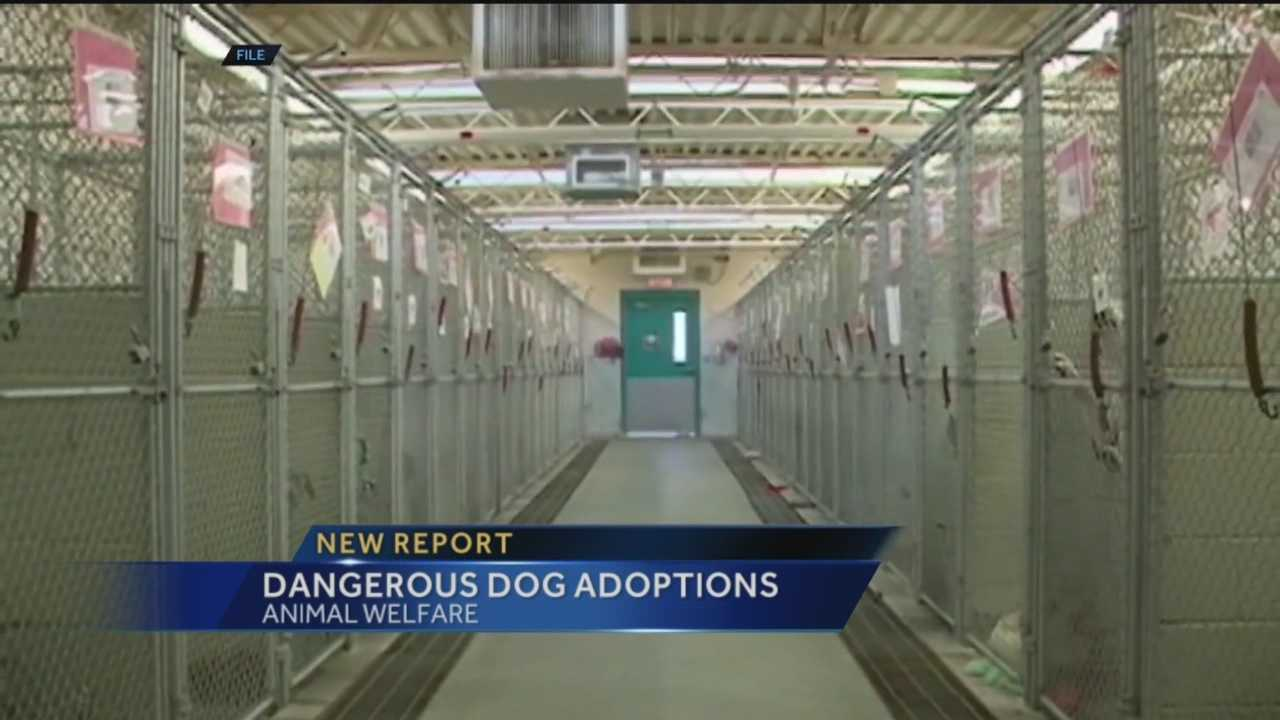 The city's Animal Welfare Department allowed dangerous dogs to be adopted by the public.