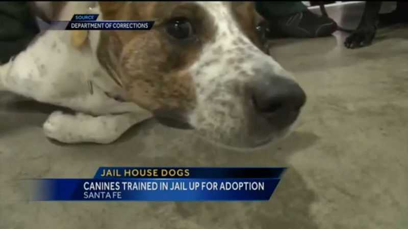 For the first time, the Department of Corrections will be adopting out dogs raised by inmates.