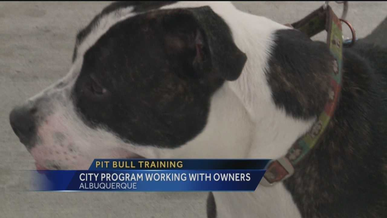 A city program is aimed at better training pit bulls.