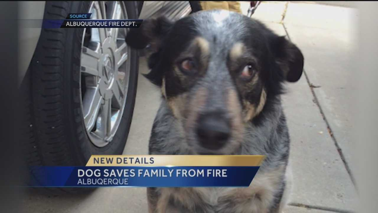 A dog alerted a sleeping family to a fire in their house Thursday.