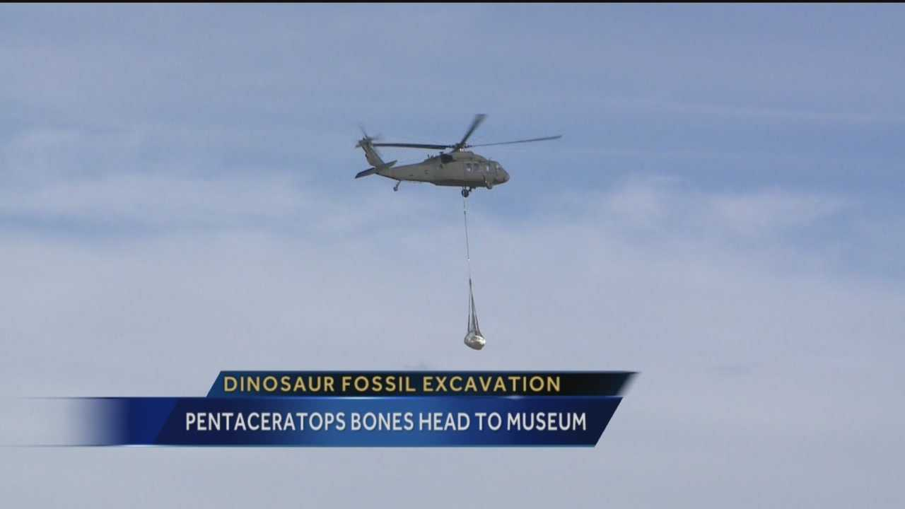 Crews used a National Guard helicopter to collect a rare baby pentaceratops fossil Thursday.