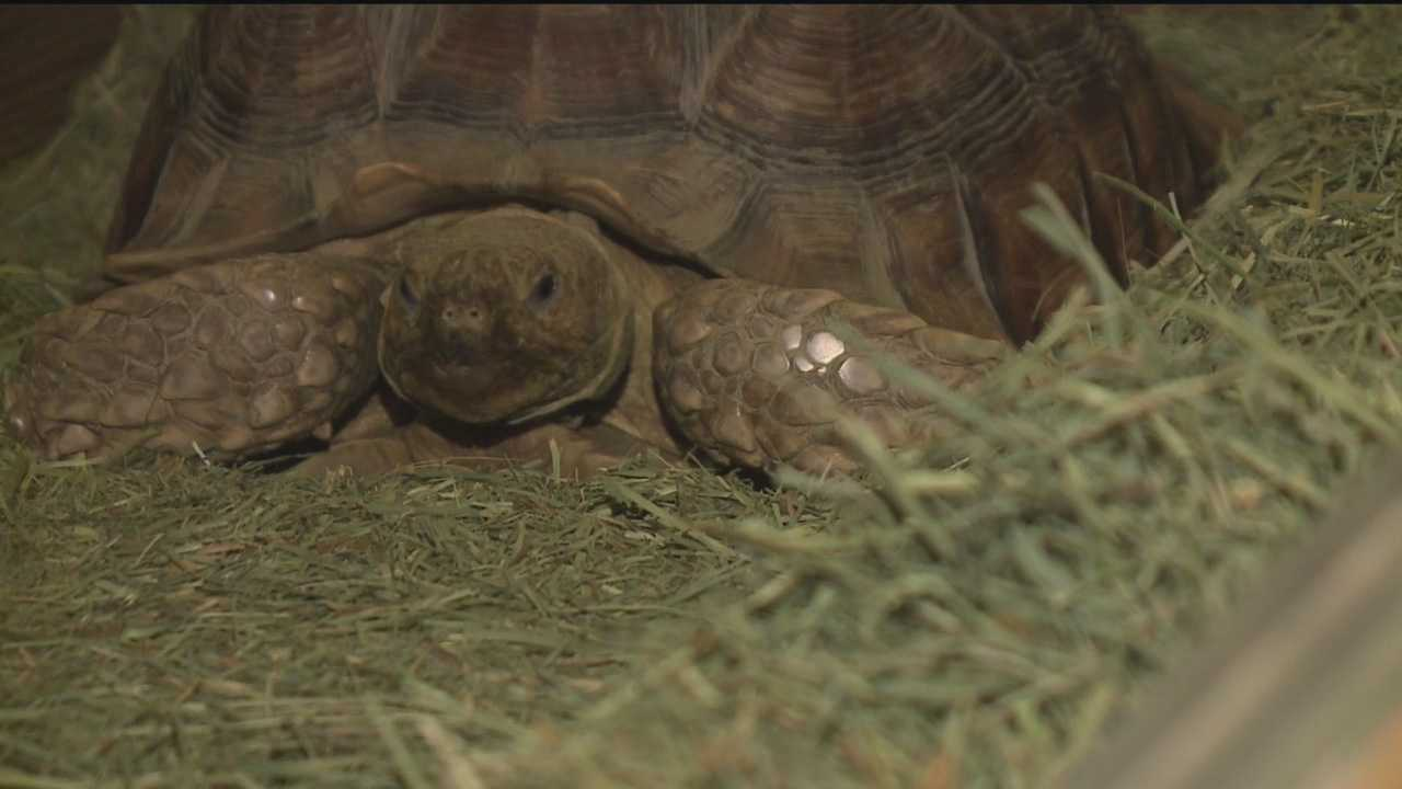 An Albuquerque homeowner has been reunited with his 10-year-old tortoise after it was stolen during a violent Sunday night home invasion.