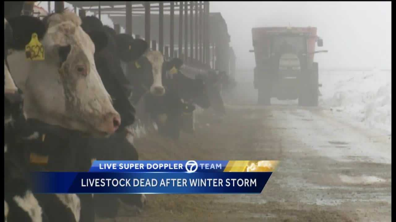 It's not clear how many New Mexico cows are dead or missing after the massive weekend snowstorm, but farmers and ranchers are slowly getting back to work.