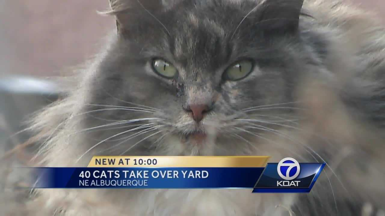 40 cats were left behind after their owner died.