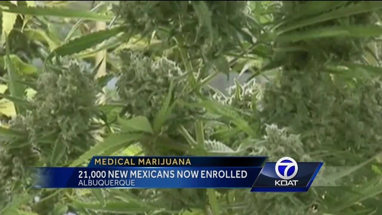 21,000 New Mexicans have medical marijuana cards