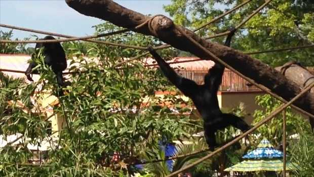 ABQ BioPark Zoo placed on lockdown to secure Siamang enclosure