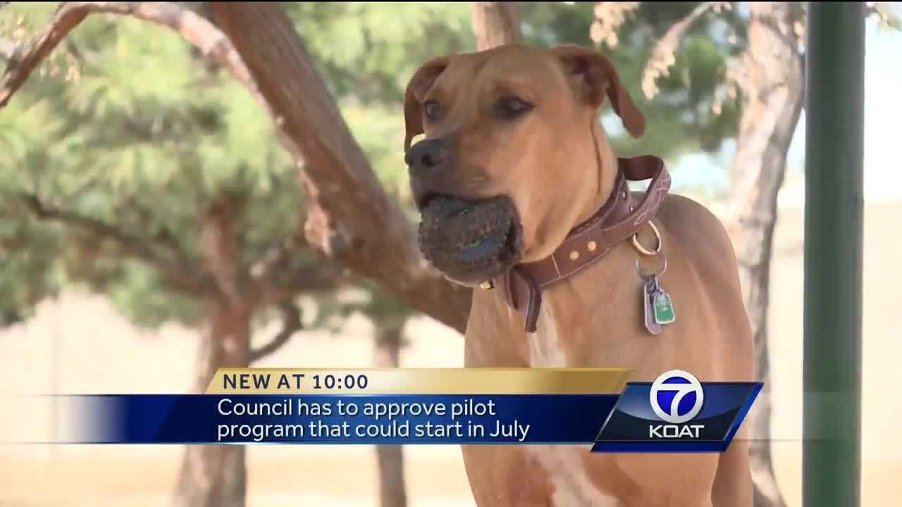 Official wants pets allowed on city buses