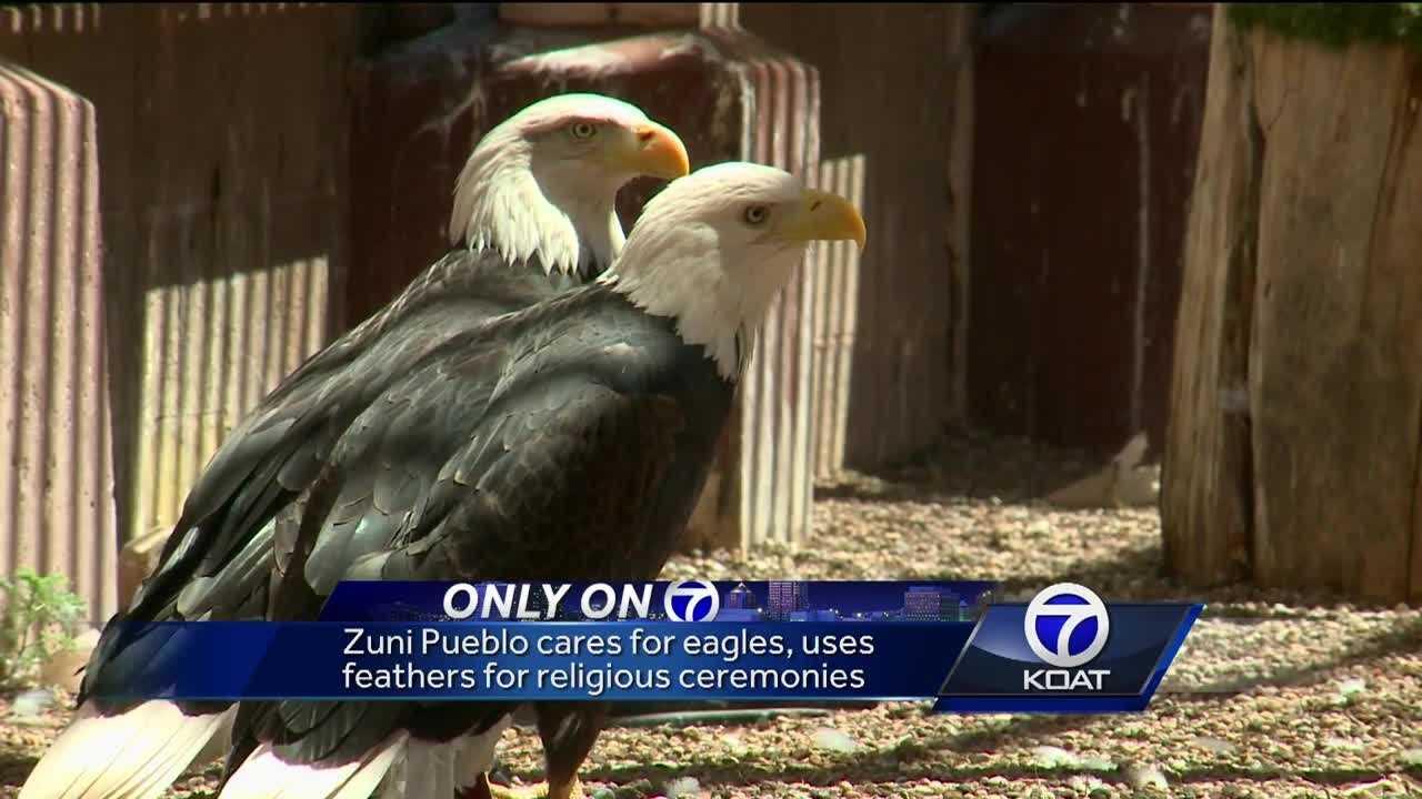 Eagle sweeps