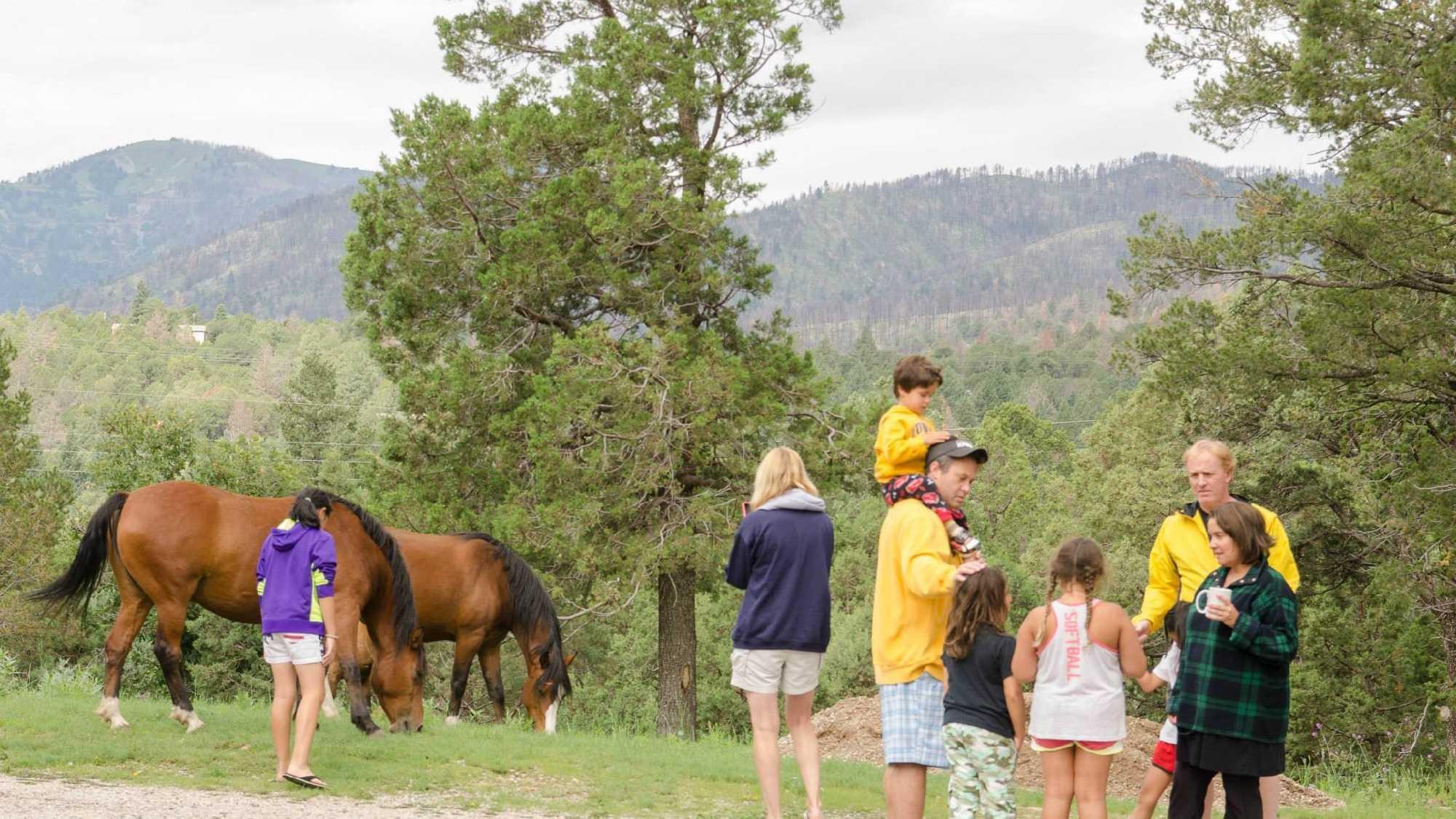 KOAT horses 2.jpg