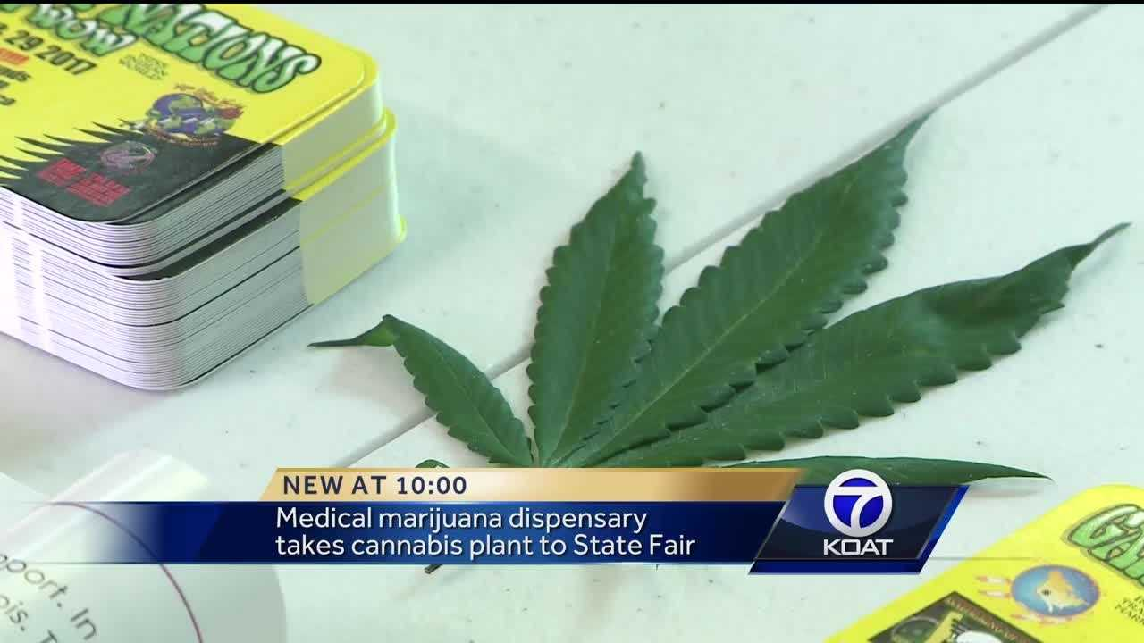 Medical marijuana dispensary takes cannabis plant to State Fair.