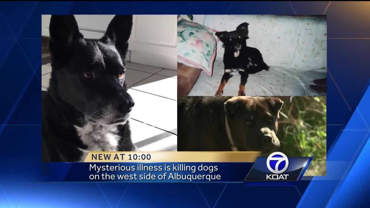 Mysterious illness is killing dogs on the west side of Albuquerque.