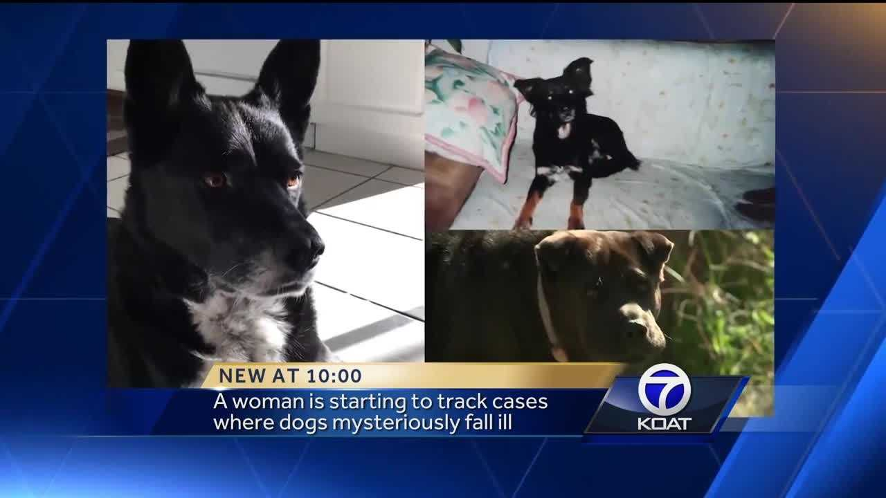 A woman is starting to track cases where dogs mysteriously fall ill.