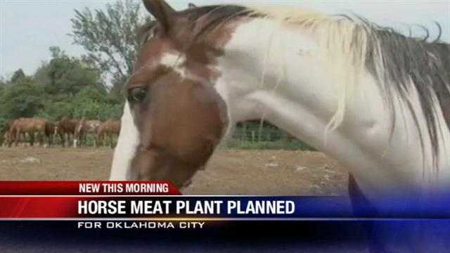 Oklahoma City could soon have its first manufacturing plant to produce horse meat.