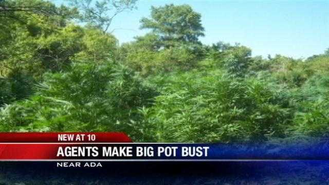 Agents found 6,000 high quality marijuana plants just north of Ada, authorities said.