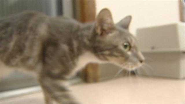 Two cats shot in two days in The Village. One of the cats, unfortunately, didn't make it -- but the other one did. KOCO's Katy Blakey has the story.