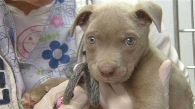 A puppy rescued from a fire is recovering thanks to a rescue group and the hard-working veterinarians at the Blanchard Animal Hospital.