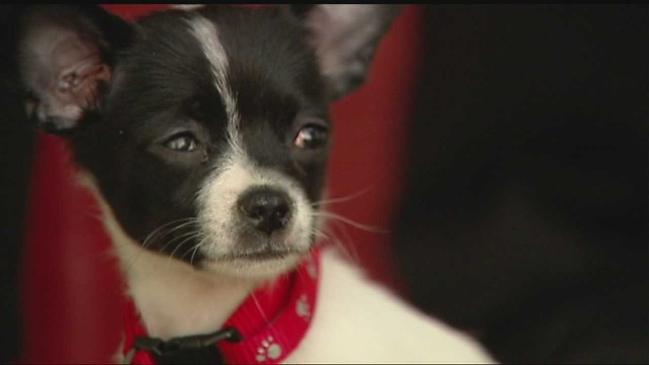 Injured puppy on road to recovery thanks to KOCO viewers