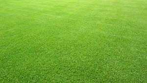 bermudagrass4.jpg