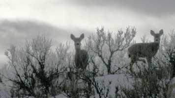 Hoarfrost: a grayish-white crystalline deposit of frozen water vapor formed in clear still weather on vegetation, fences, etc.