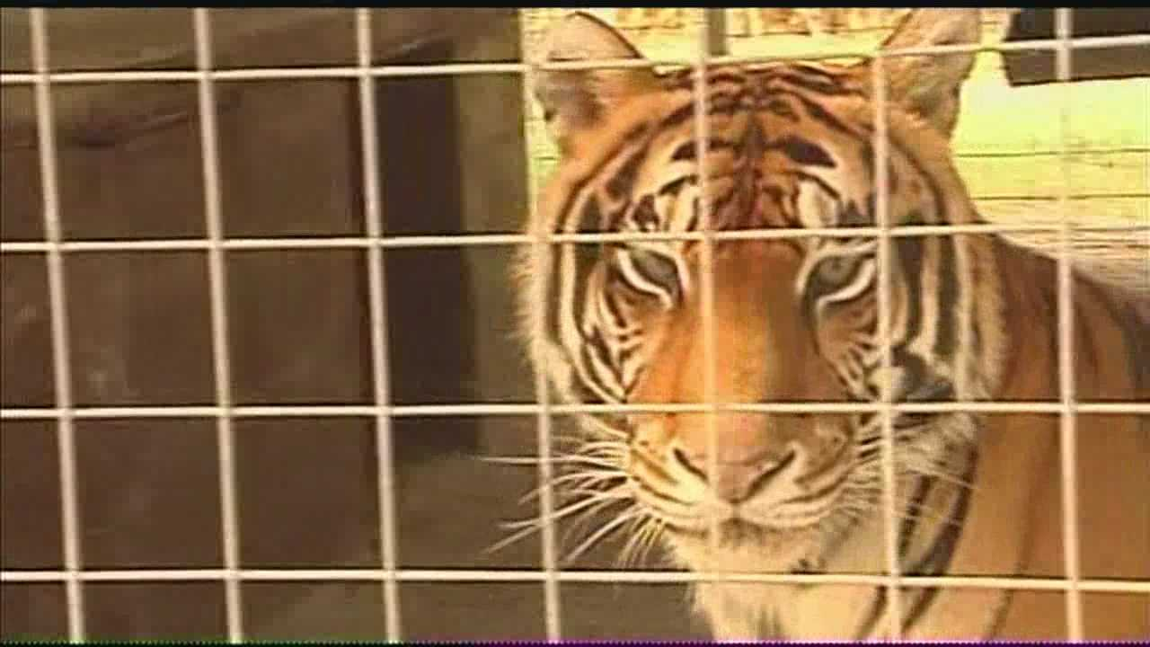 img-Woman undergoes second round of surgery after tiger attack 5P H