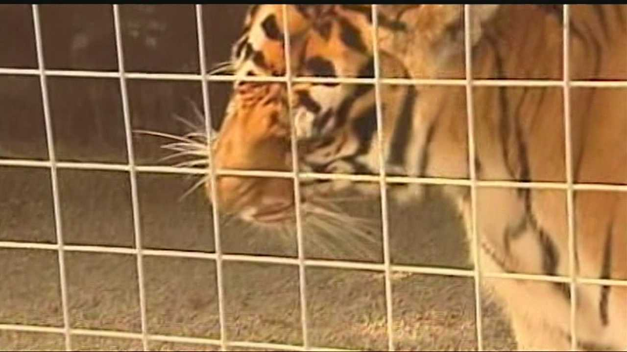 KOCO did some digging after the tiger mauling at an Oklahoma exotic animal park.  It turns out that for $50 you can get a license to house native wild animals.