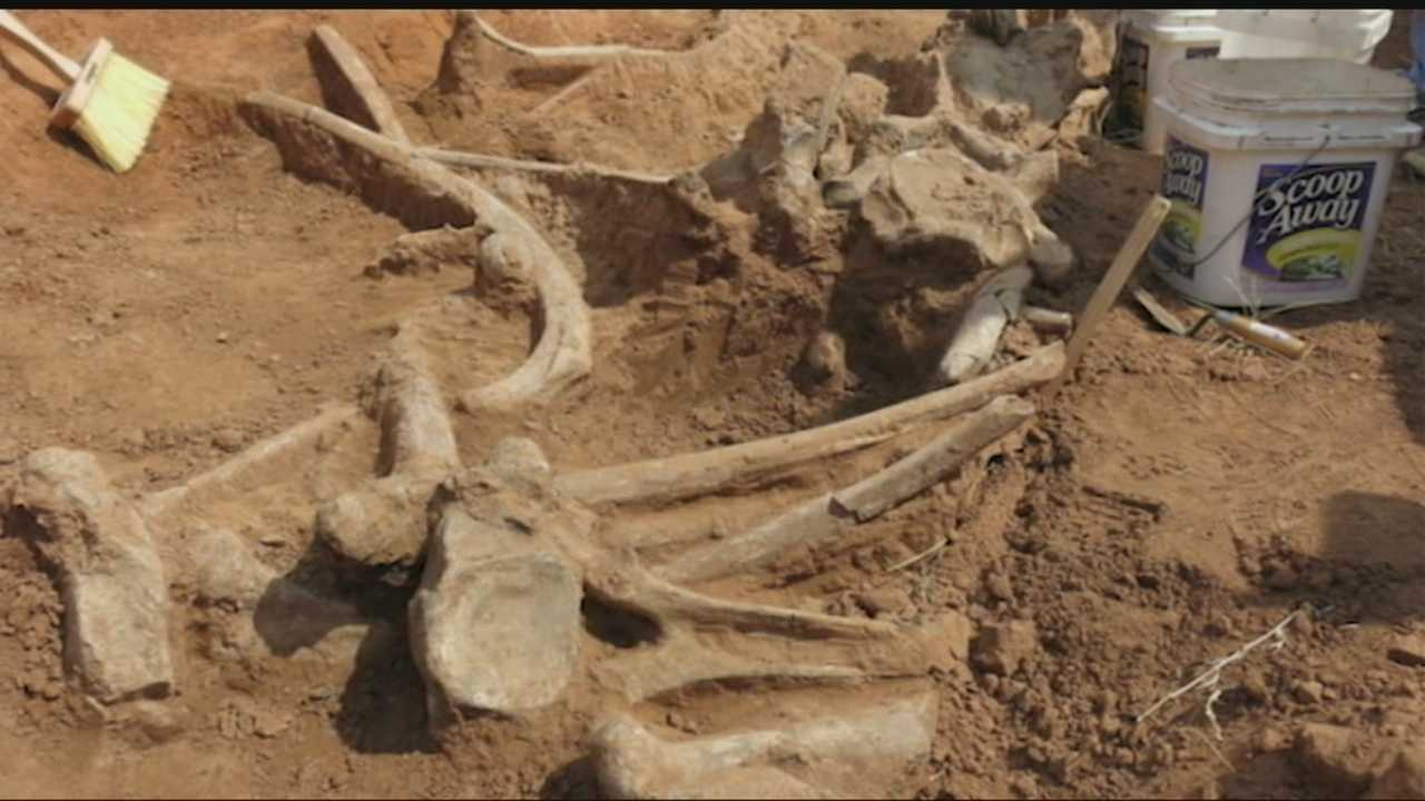 img-Work crews find remains of mammoth near Enid