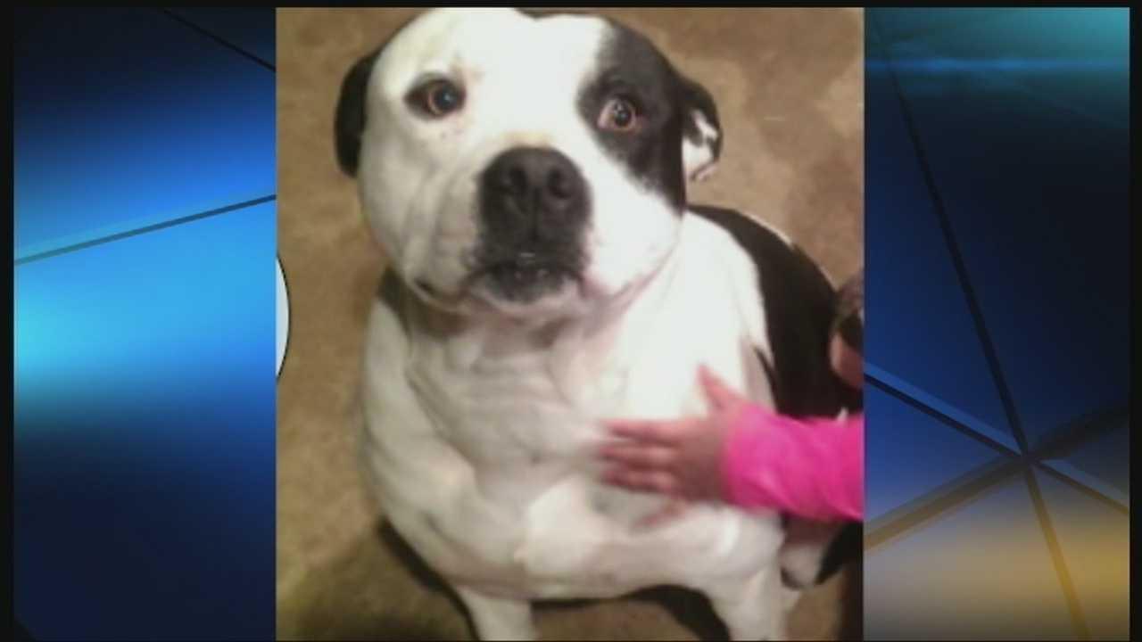 img-Pit bull awakens Edmond family to escape blaze