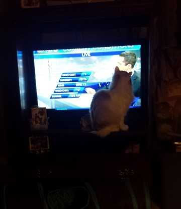 Kawsha the cat loves watching Channel 5, according to his owner who lives in Oklahoma City
