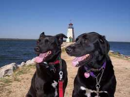 Chief photographer Kyle Hamm's dogs dominoe and baylea.