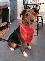 Morning anchor Katy Blakey's dog Huckleberry.