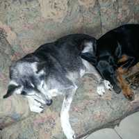 Assignment editor Jason Oden's dogs Tway and Jasmine.