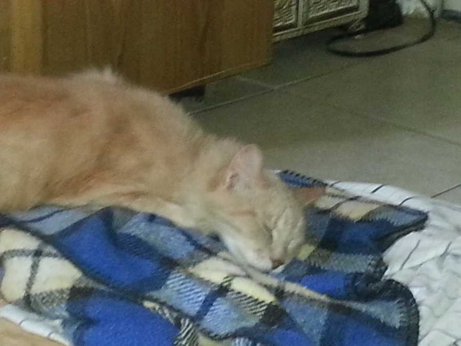 Assignment editor Jason Oden's cat Sassy.
