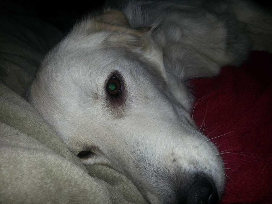 Assignment Editor Jason Oden's dog Sadie.