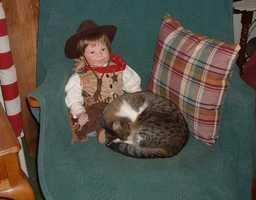 Receptionist Gwen Hervey's cat Little Girl.
