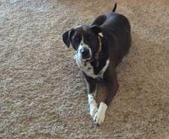 Producer Elise Smith's dog Lacey.