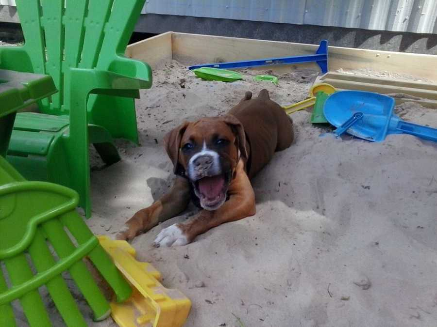 Aegis loves playing in the sandbox