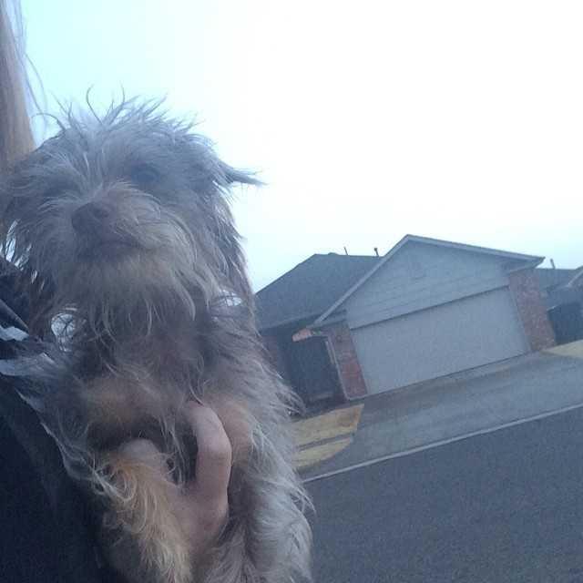 *FOUND DOG*Female dog found in Edmond near 164th and Penn. She had no collar, tag or chip.