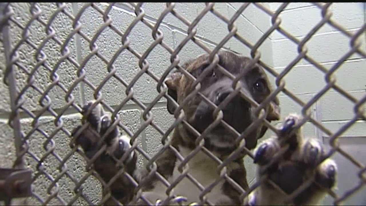 img-Midwest City sees pet adoptions rise