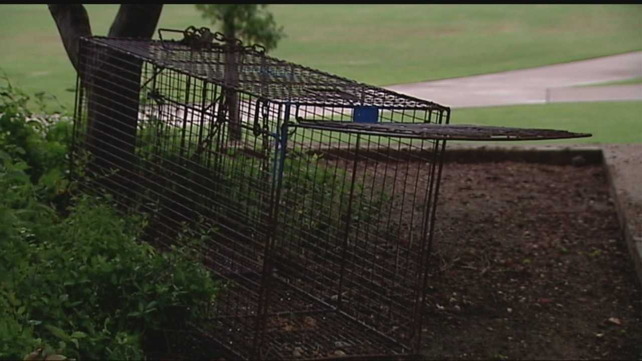 Animal control has set traps to capture dogs who are attacking visitors at the Oklahoma State Capitol.